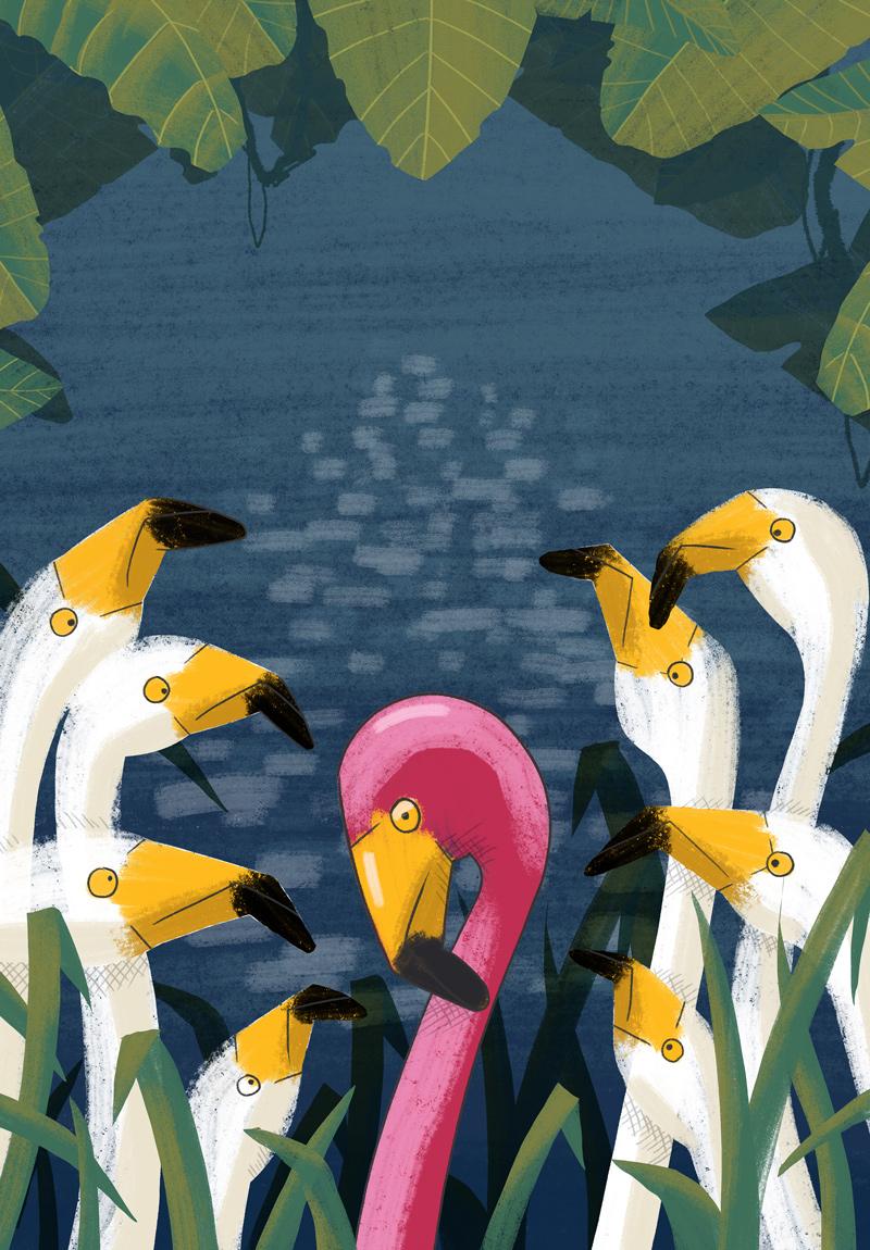 Flamingos-Alan-ORourke-kids-Illustrator