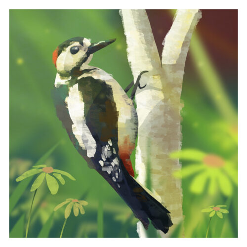 Great-Spotted-Woodpecker-Ireland-Alan-ORourke.jpg